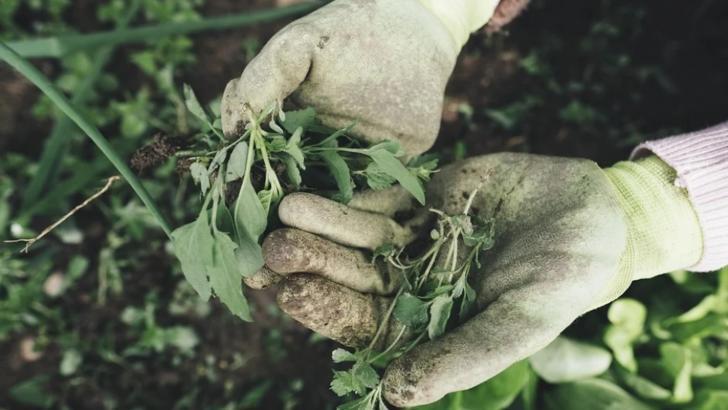 Mai mulți români, depistați cu Covid-19, la o fermă agricolă din Spania