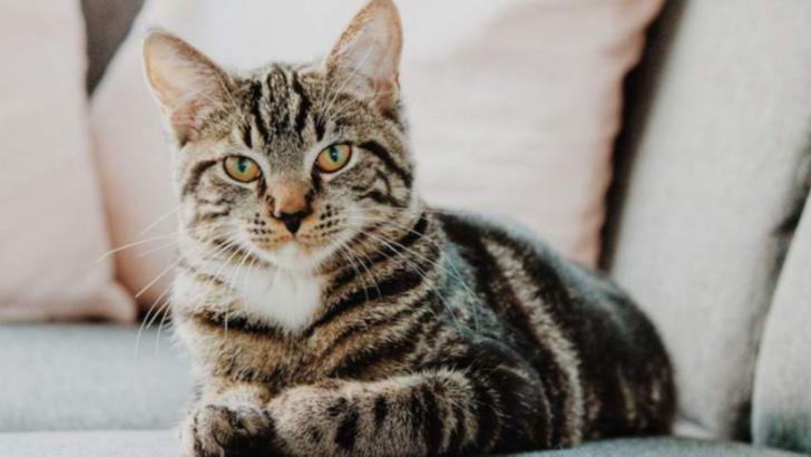 Oamenii care au pisici ca animale de companie nu știu aceste lucruri extrem de importante despre ele