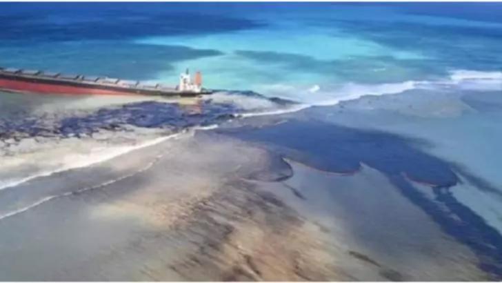 Cel puțin 40 de delfini morți în urma dezastrului ecologic din Mauritius