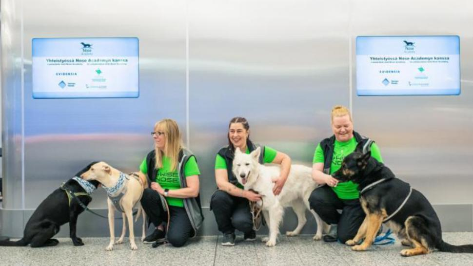 Câini special antrenați, aduși pe un aeroport din Helsinki pentru a depista pasagerii cu COVID-19. Pot descoperi boala cu 5 zile înainte să apară simptomele