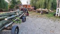 Confiscare transport lemnos ilegal în jud. Prahova