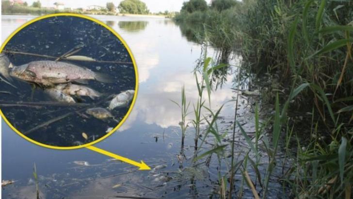 Asociațiile de mediu avertizează asupra pericolului gropii de gunoi Vidra operată de ECO SUD S.A.