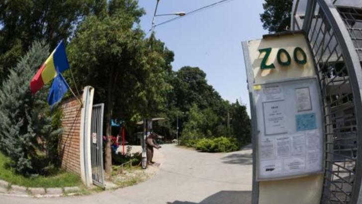 Toti cangurii de la Zoo Timisoara, ucisi de o haita de caini