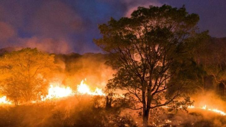 Stare de urgență în Brazilia din cauza incendiilor care au cuprins regiunea Pantanal