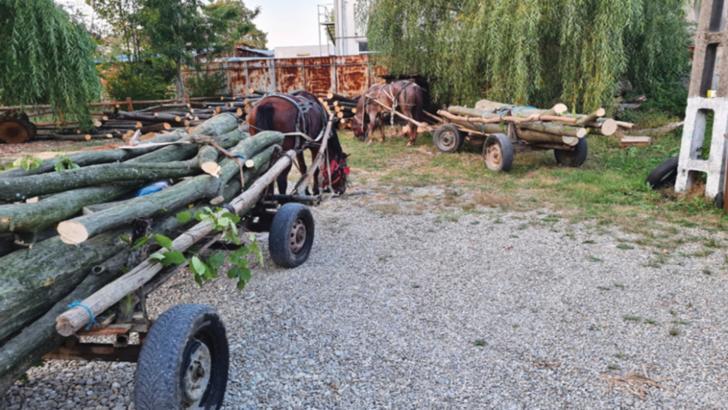 Jandarmii prahoveni au confiscat mai multe transporturi ilegale de lemne. Hoții au scăpat fugind în pădure