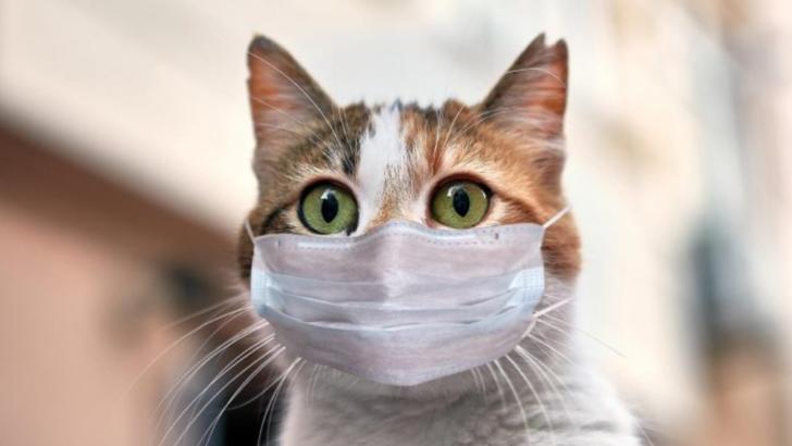 """În atenția iubitorilor de feline. A apărut aplicația care traduce """"pisiceasca"""""""