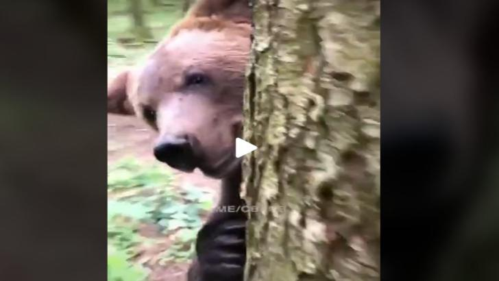Panică în Bucegi, un urs a dat iama într-o bază de cercetare (foto arhiva)