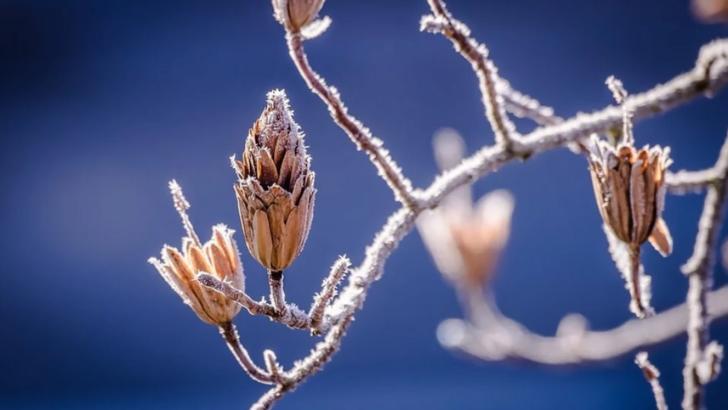 Ninsorile vor continua în țară, iar minimele vor atinge -10 grade Celsius. Vreme rece și săptămâna viitoare