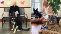 Câinii și pisicile prezidențiale de la Casa Albă