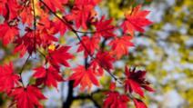 Prognoza mateo 23 noiembrie: schimbări radicale ale vremii