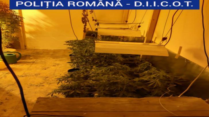 cannabis craiova