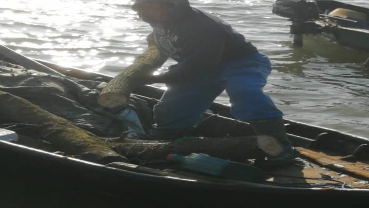 Se intampla in Romania: Barbat, prins cu barca la furat de lemne!