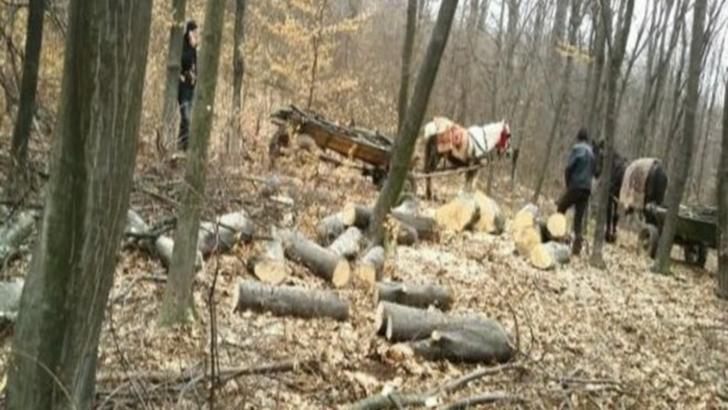 A tăiat arbori din pădurea primăriei. Ce s-a întâmplat cu materialul lemnos din județul Alba