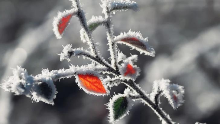 Alertă meteo: cod GALBEN de ceață și burniță