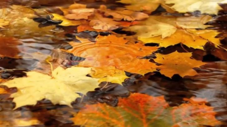 Prognoza meteo 16 noiembrie. Temperaturi ridicate, ploi pe arii extinse