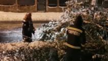Copaci doborâți la pământ după prima ninsoare