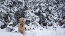 Administrația Națională de Meteorologie a prelungit informarea meteo de ninsori și viscol