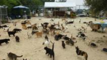 Victime nevinovate ale pandemiei. Cipru, paradisul pisicilor, a devenit un infern