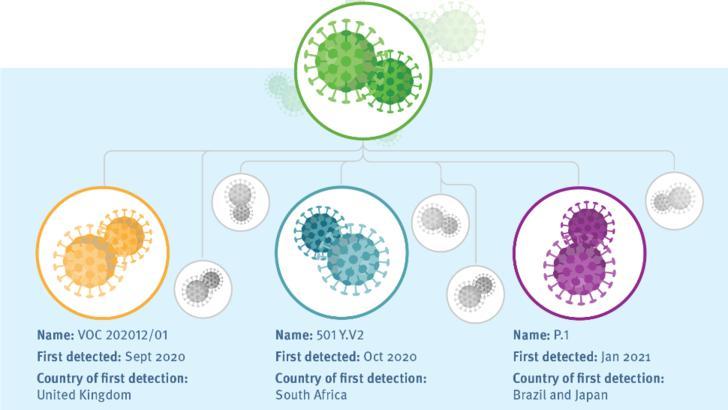 cele trei mutații răspândite pe lângă versiunea originală a coronavirusului în Europa