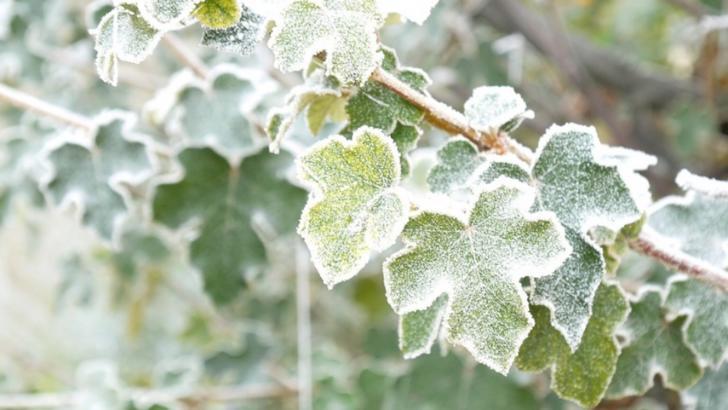 Prognoza meteo 19 ianuarie. Vreme deosebit de rece, geroasă dimineața