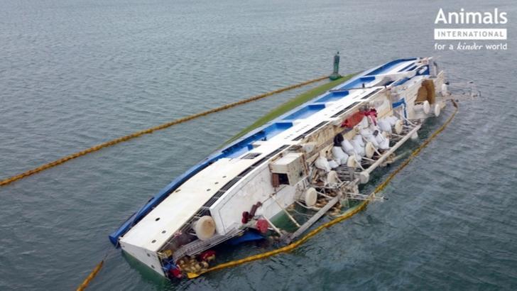Anchetă - Oile moarte de pe nava Queen Hind, scufundată în Portul Midia în 2019, nu au fost incinerate