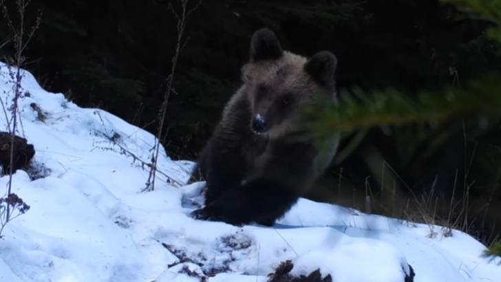 Un ursuleț a demontat și furat o cameră de monitorizare în munții Piatra Craiului Foto: Facebook.com/Romsilva