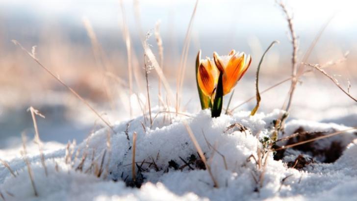 Vremea se schimbă radical: temperaturi de primăvară în toiul iernii