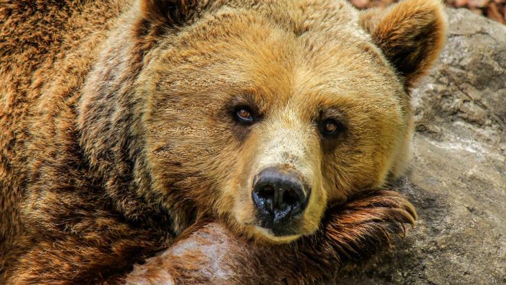 Ursi ademeninti de turisti