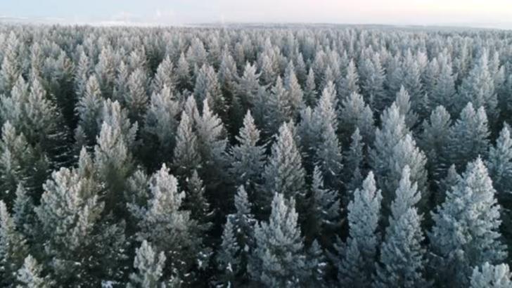 Și-a abandonat copiii în pădure, la -15 grade Celsius. Micuții au fost salvați, dar suferă de degerături