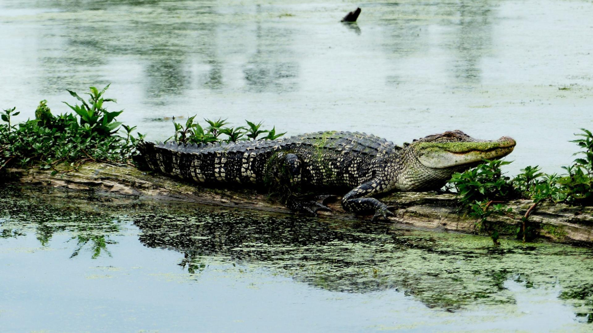 Crocodilii au scapat de la o ferma din Africa de Sud