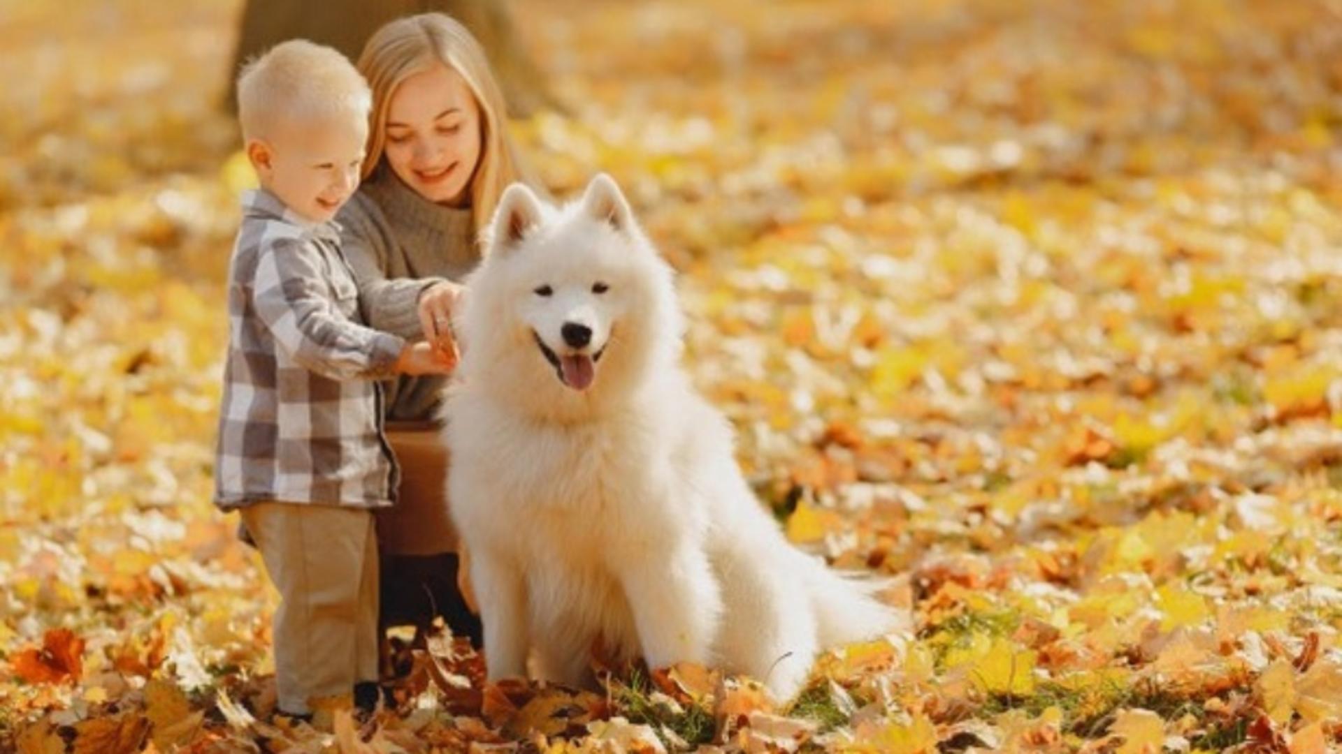 Studiu despre câini și poluare