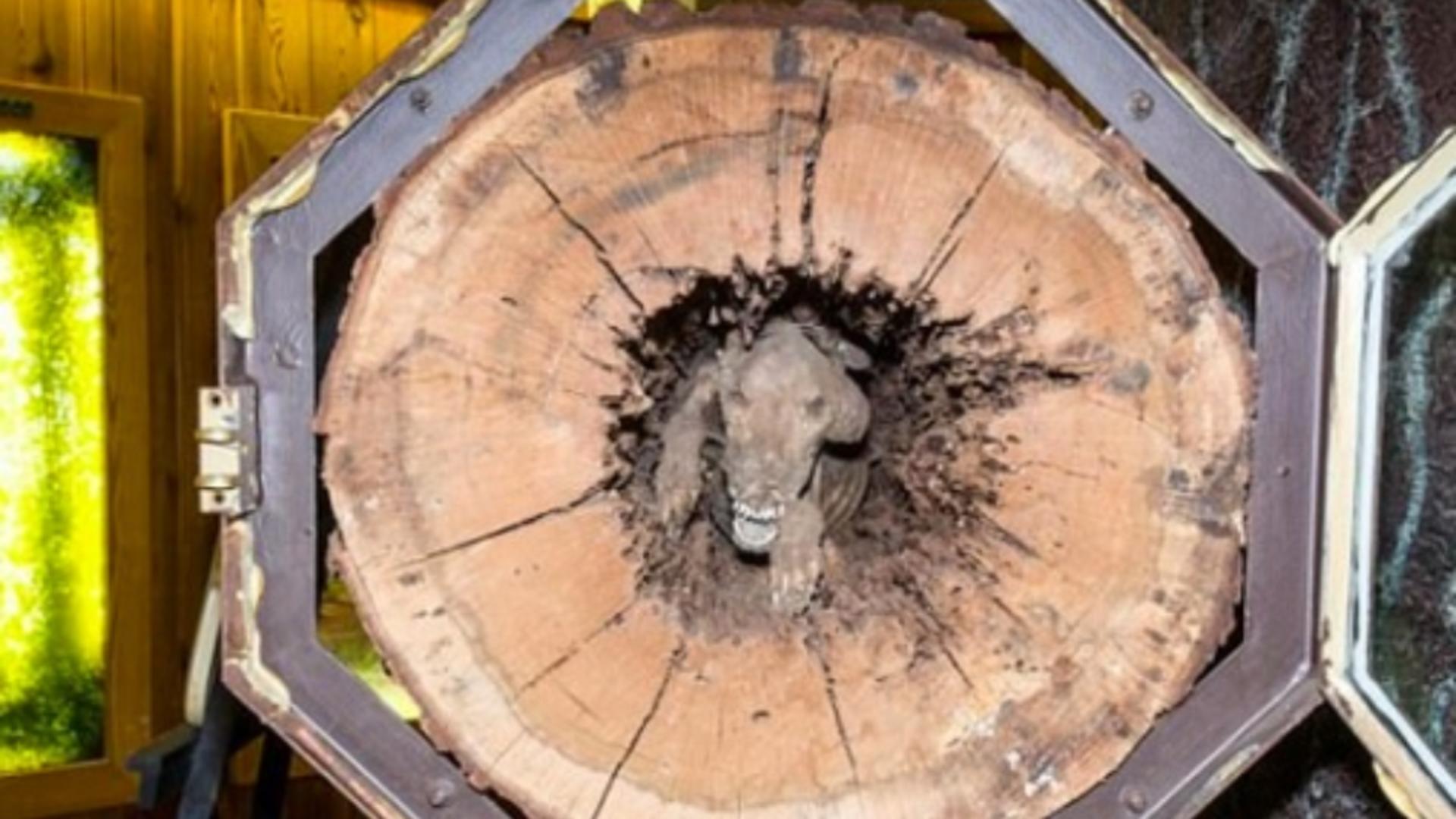 Mai mulţi tăietori de lemne din Georgia, Statele Unite, au avut parte de o surpriză uriaşă