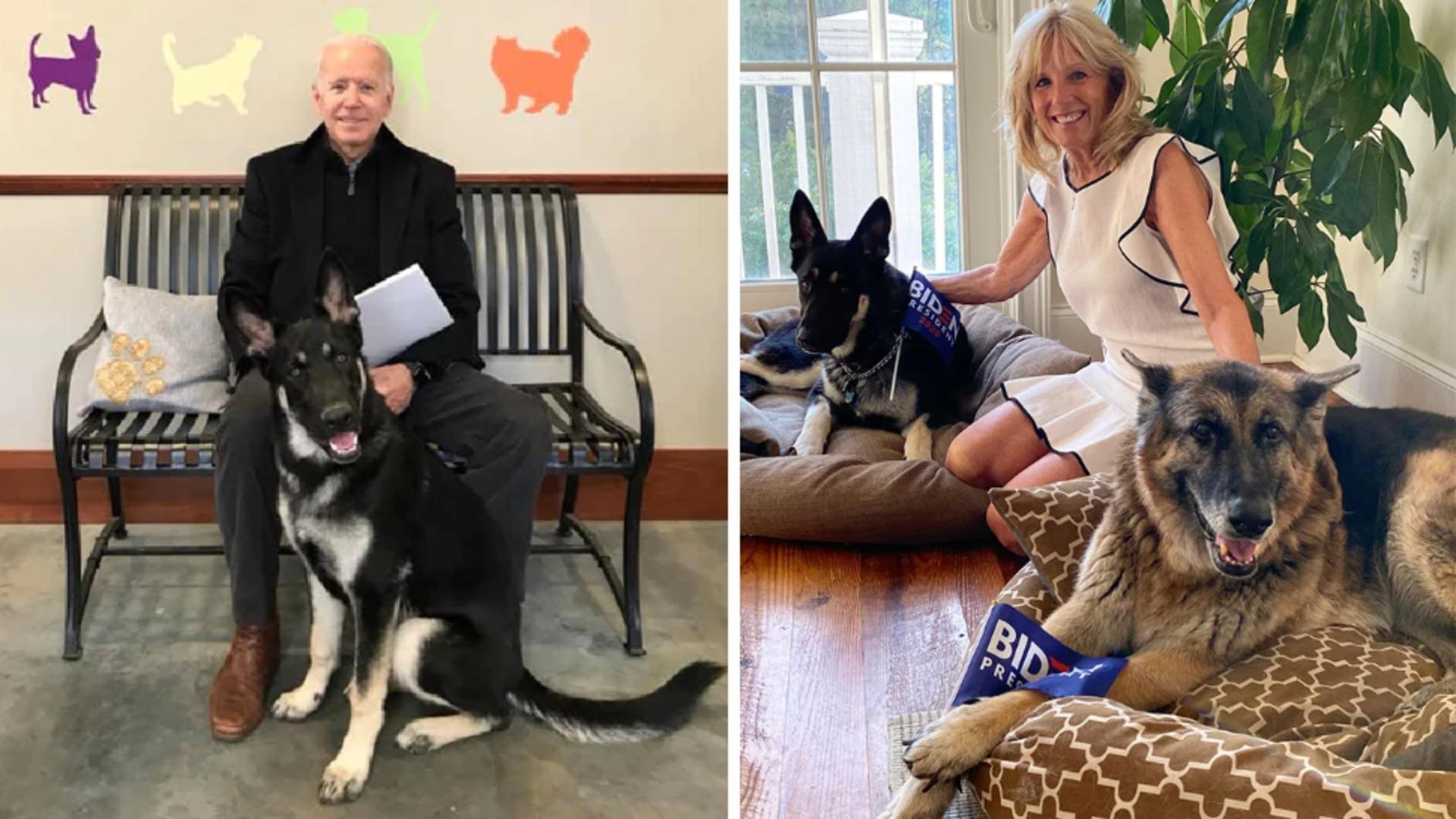 Cei doi ciobănești germani, Major și Champ, ai familiei Joe Biden Foto: washingtonian.com