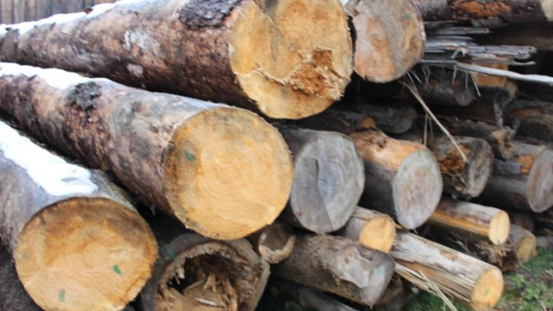 Un pădurar a fost obligat în instanţă să plătească lemnul furat
