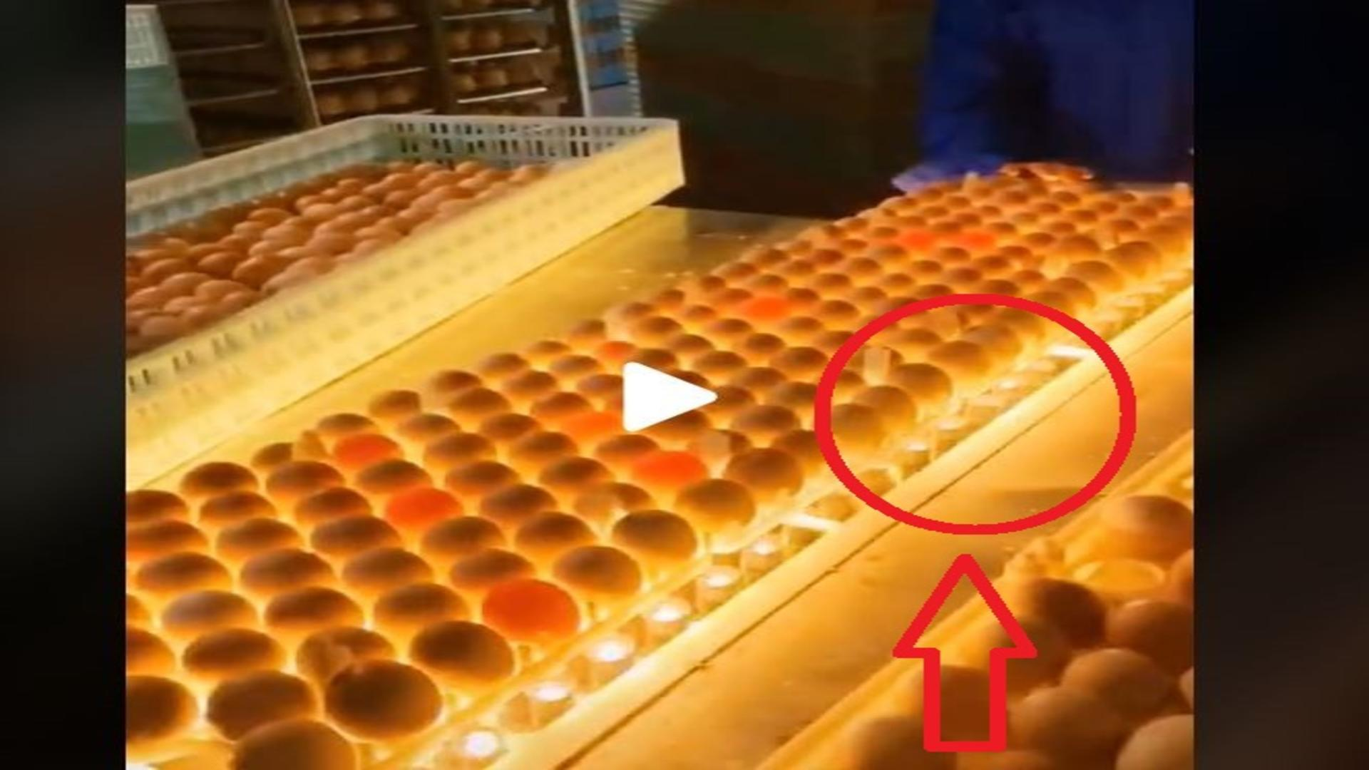 Fabrica de oua