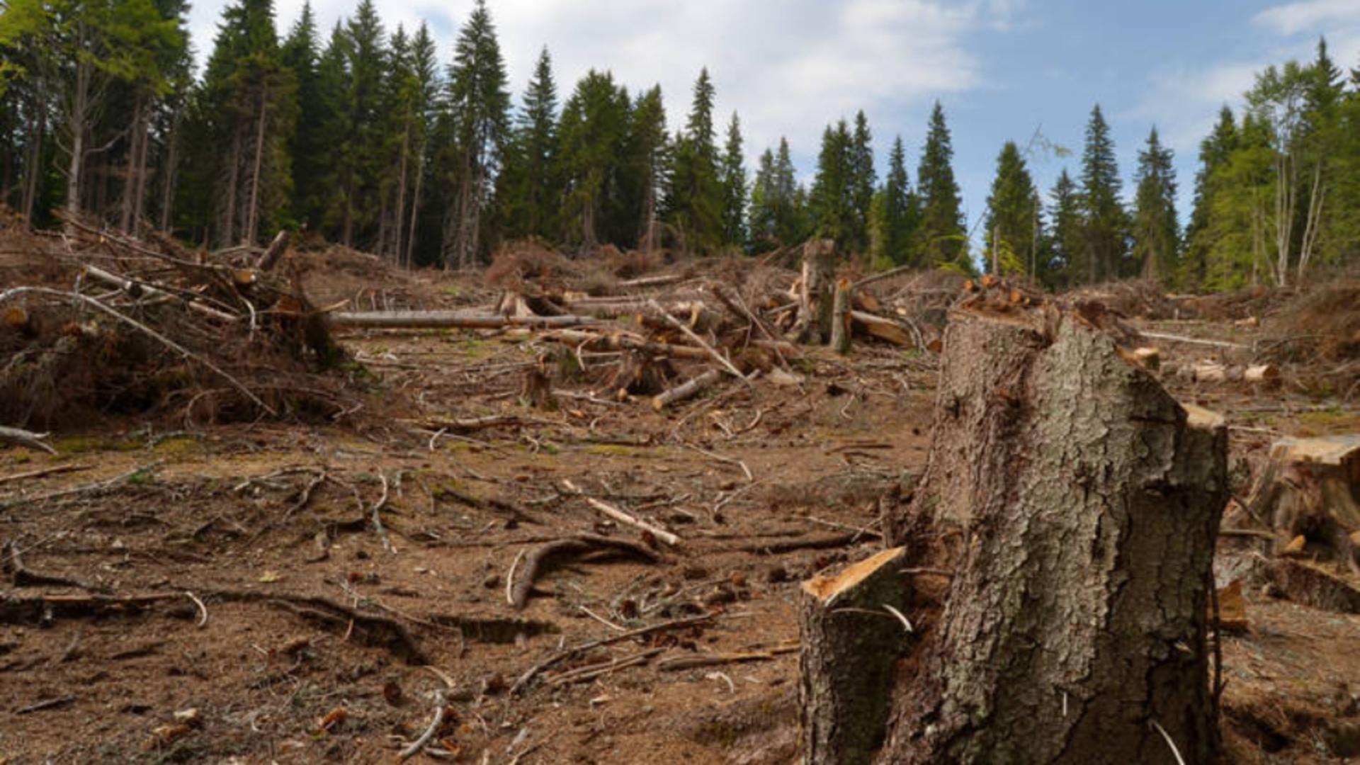 Tanczos Barna critică strategia UE pentru păduri