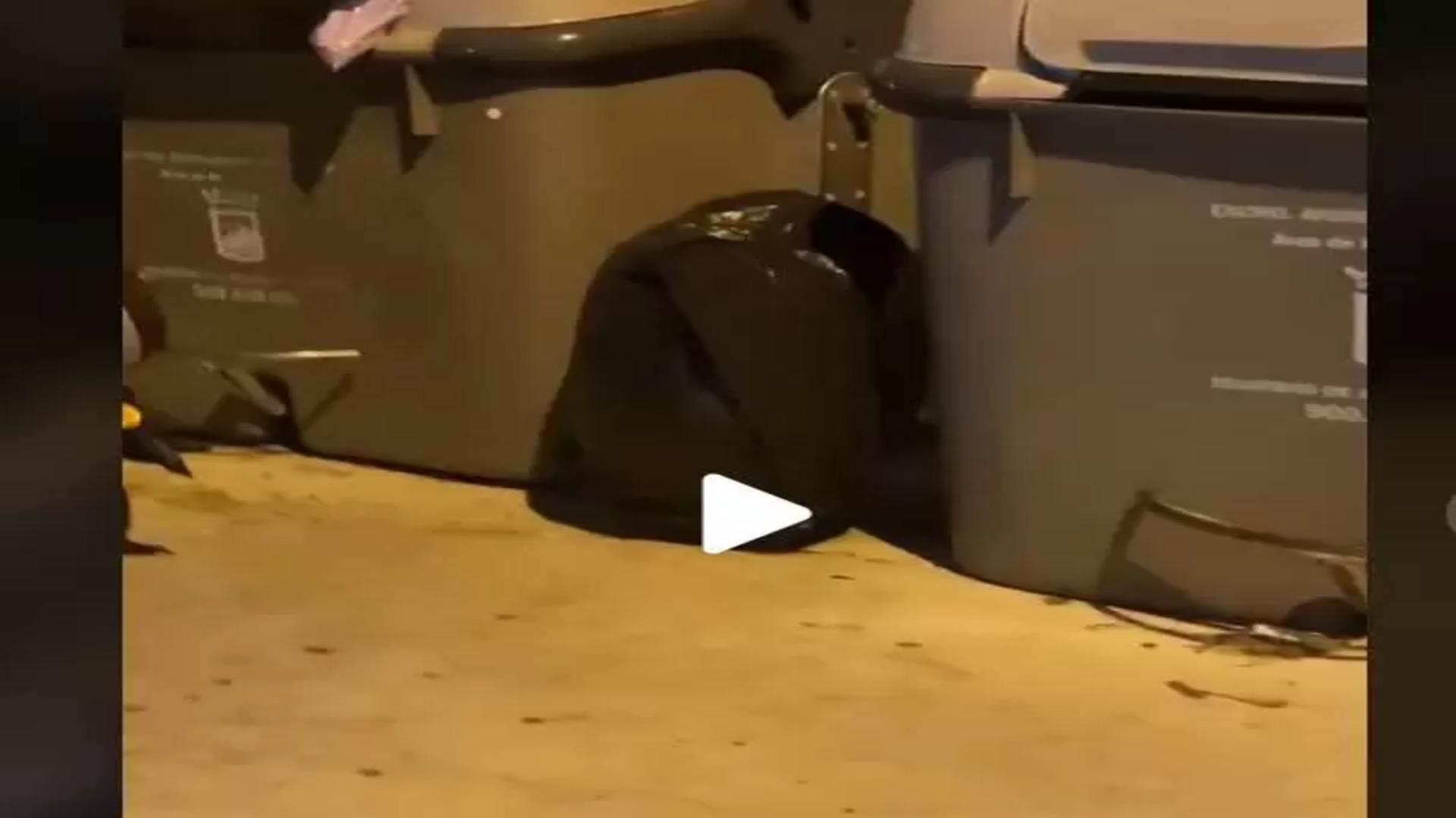 Pubelă de gunoi