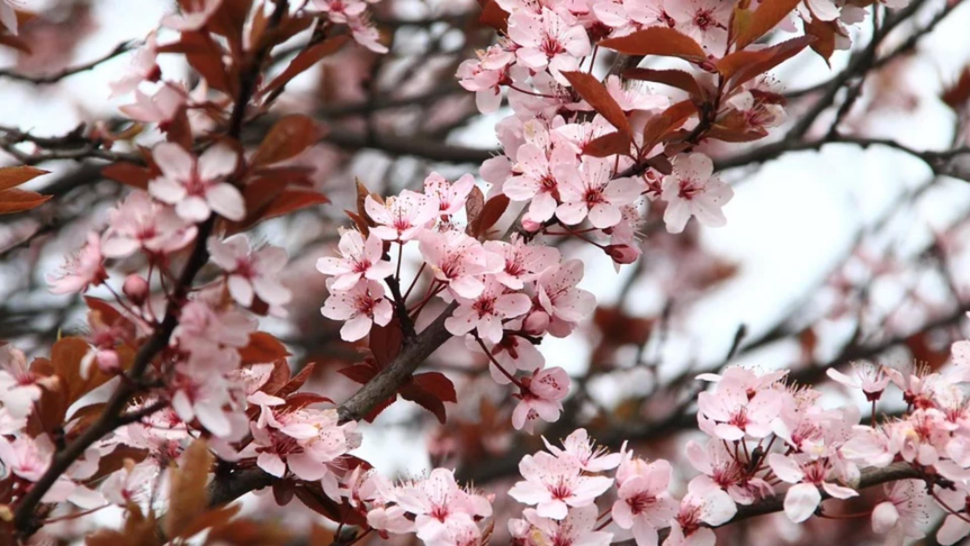 Primăvara. Cum va fi vremea pe 27 martie