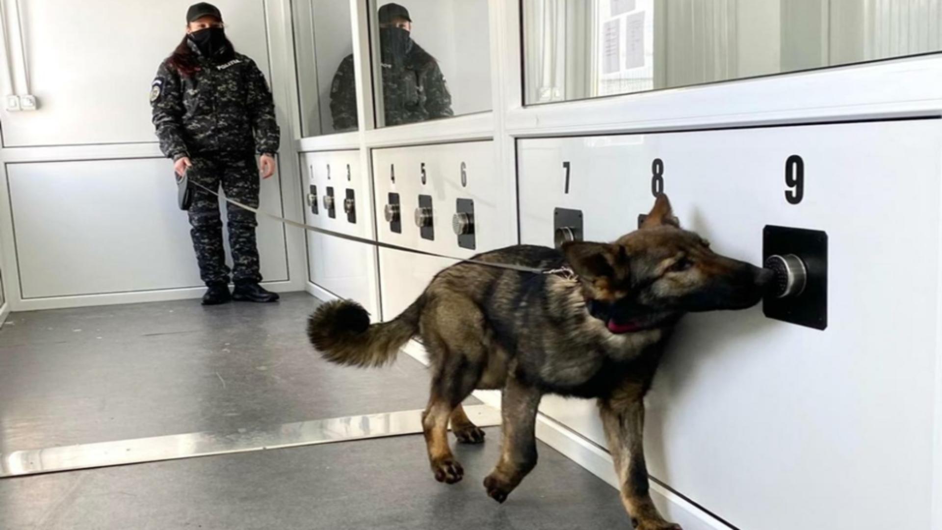 Câini antrenați pentru a detectat COVID-19