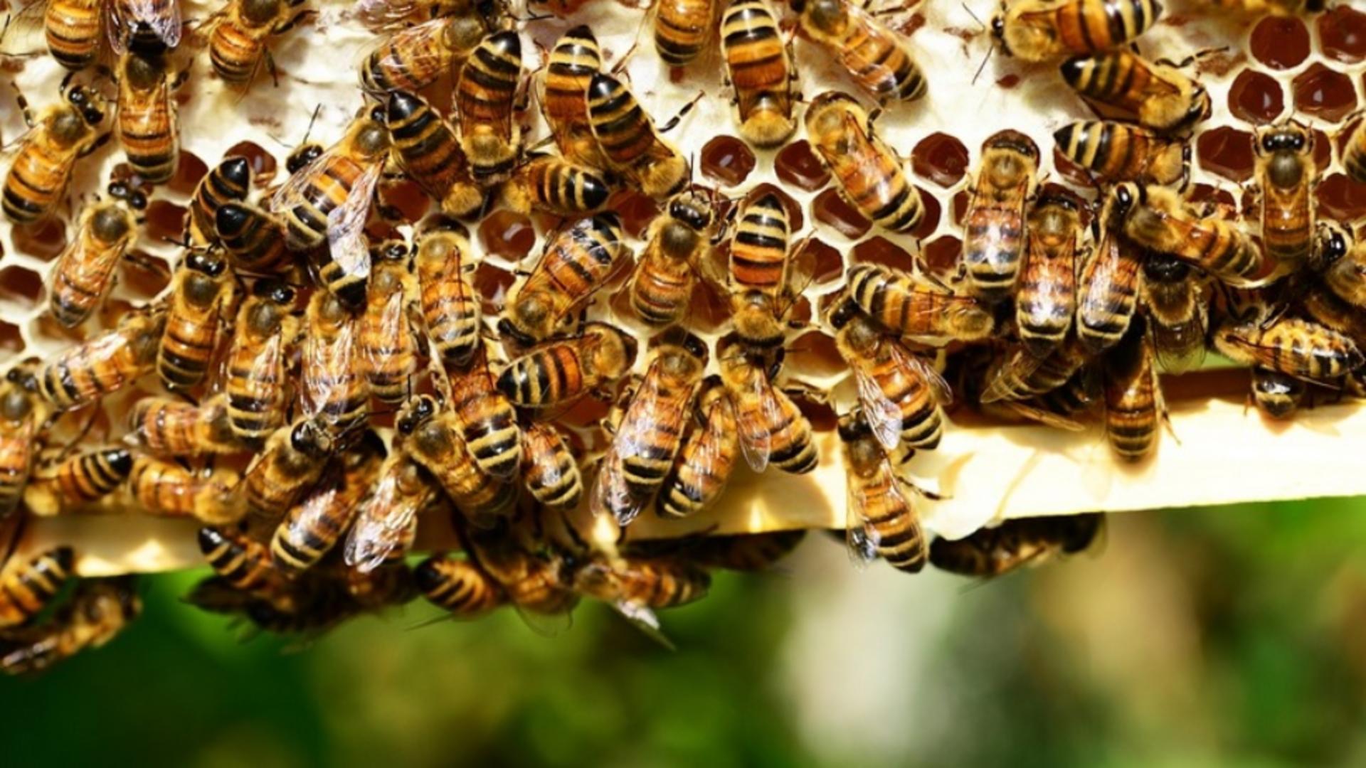 Bărbatul a fost înțepat de albine și a intrat în șoc anafilactic