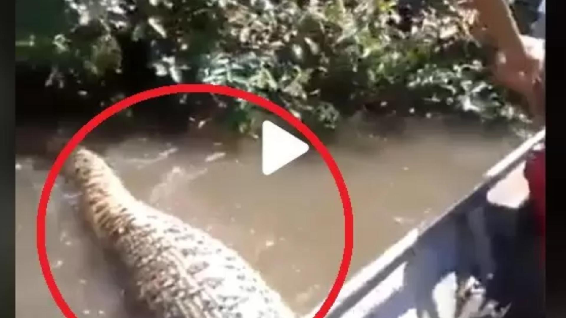 Mergeau cu barca pe râu când a apărut... un monstru uriaș – Puțin a lipsit până la o tragedie