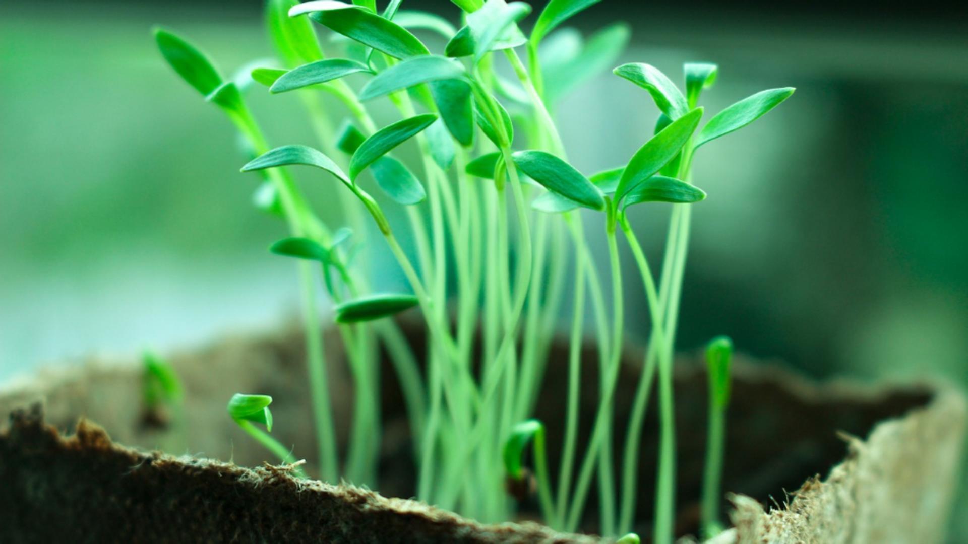 Sfaturi de la GrădinaMax privind păstrarea și plantarea semințelor și răsadurilor