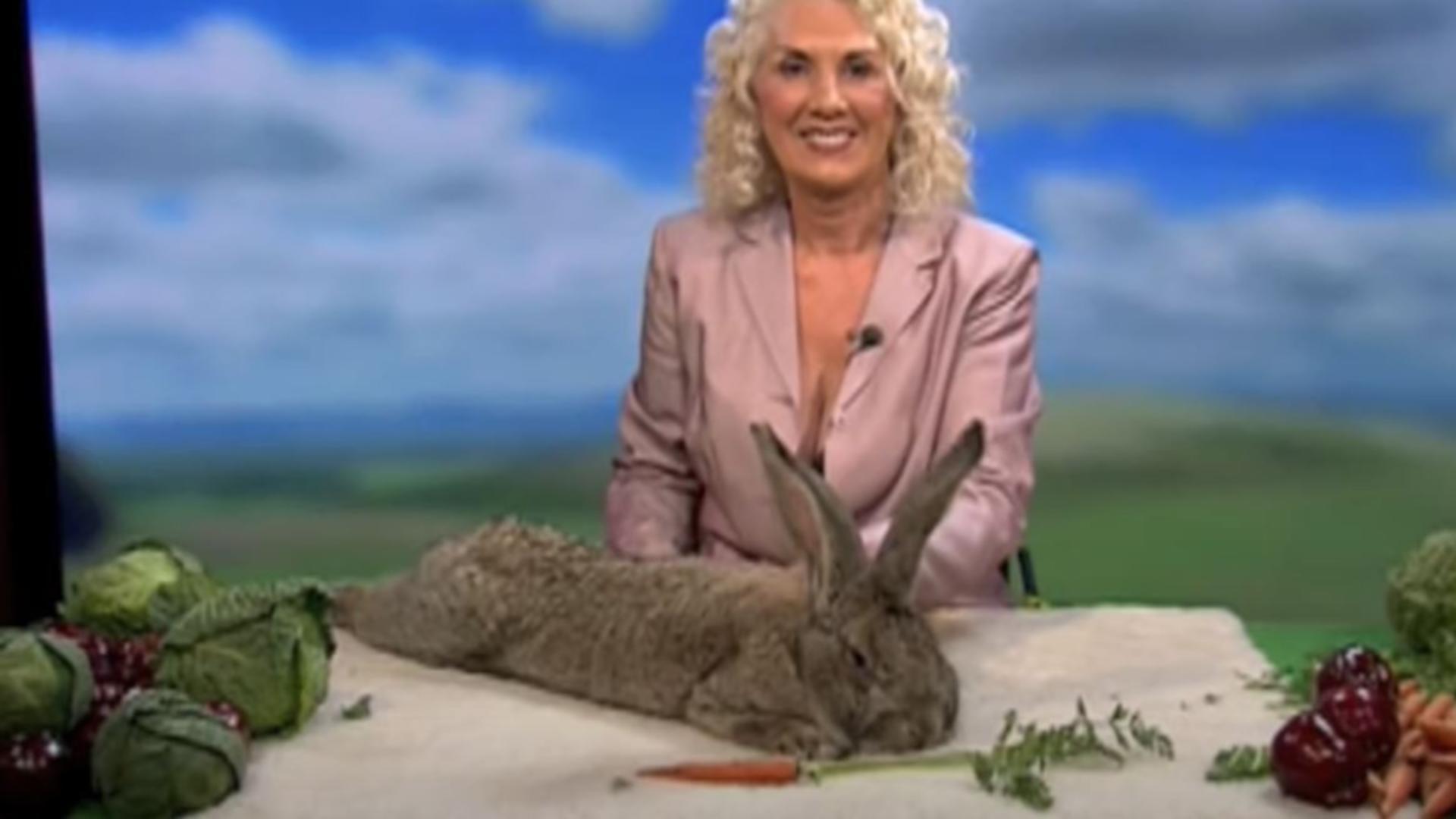 Cel mai mare iepure din lume, furat de la stăpâna sa, fostă vedetă Playboy. Foto/Captură video