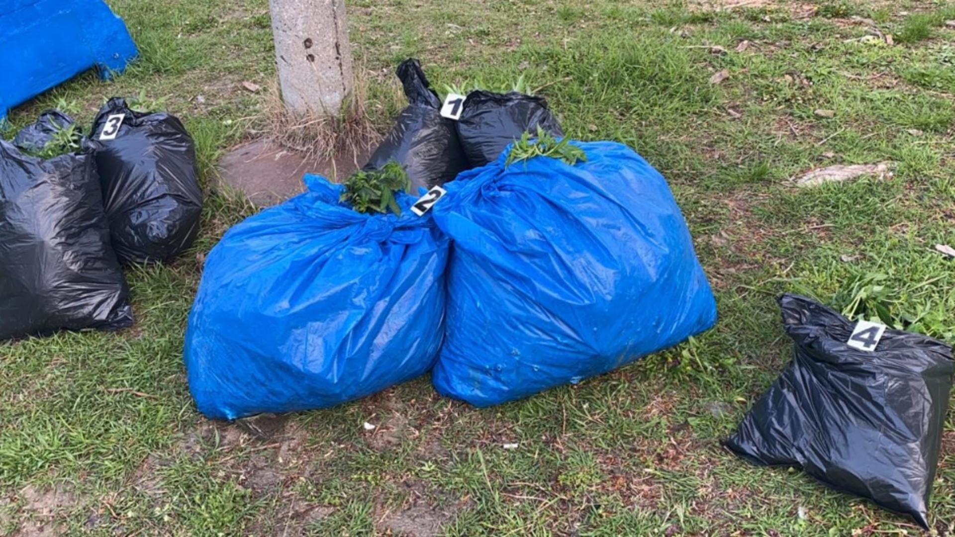 Zeci de kilograme de cannabis, ascunde in saci (foto: Poliția Română/DIICOT)