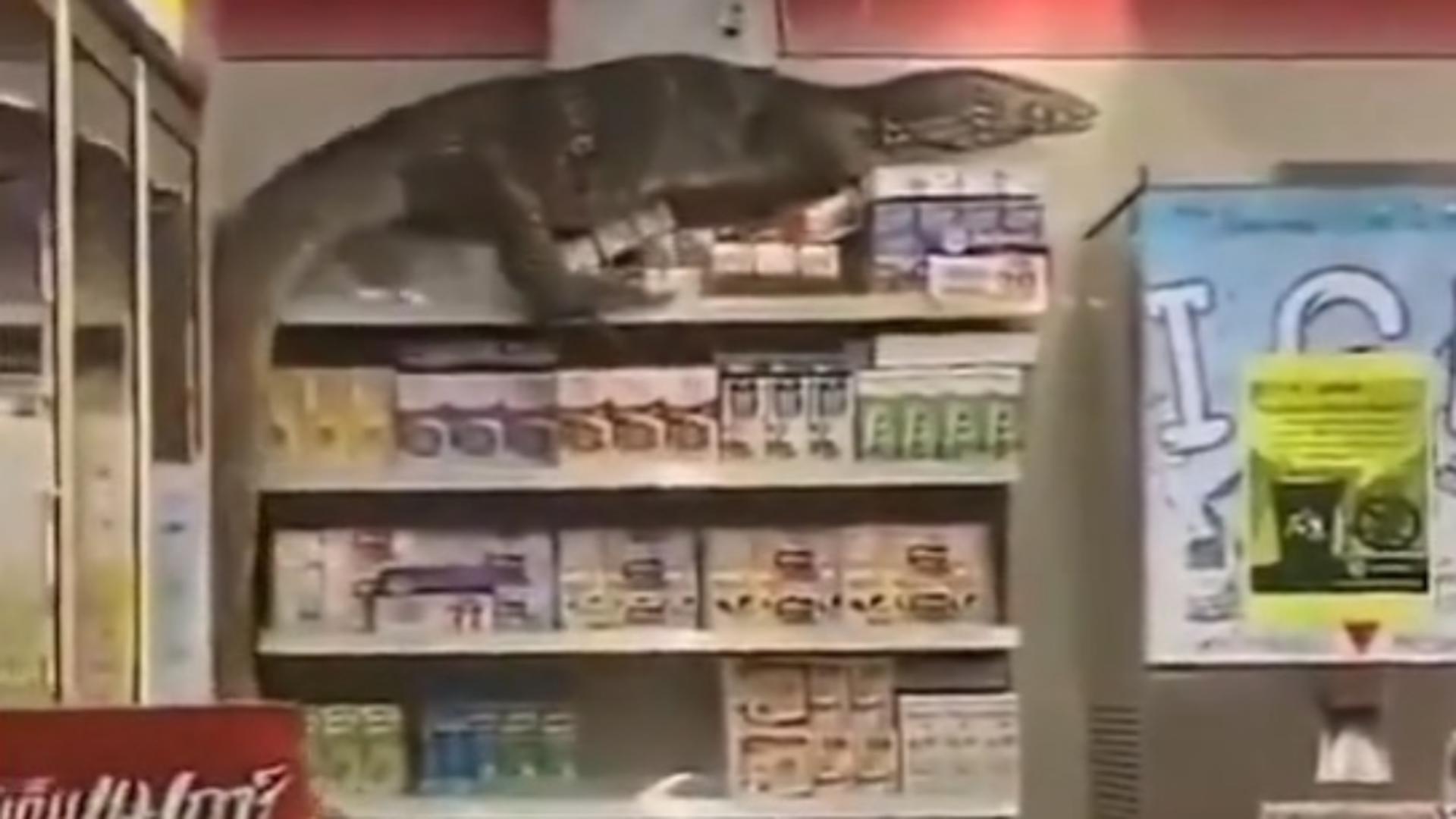 Varanul a ieșit dintr-un canal și a ajuns în farmacie