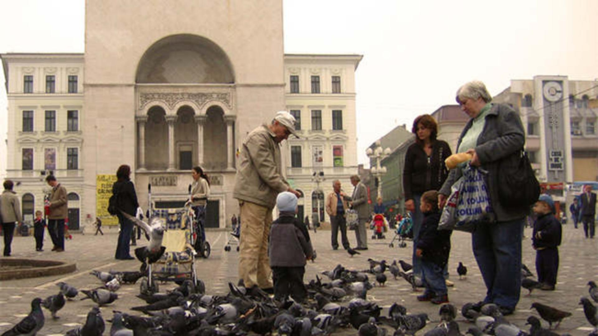Porumbei in Piața Operei din Timișoara (foto: Primaria Timisoara)