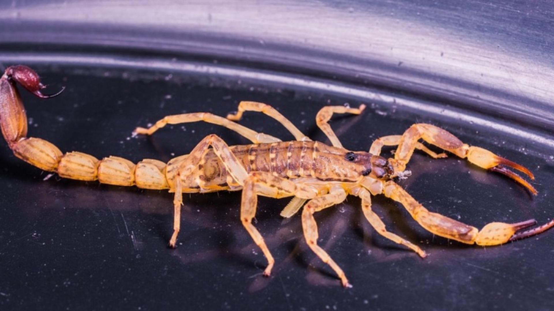 O femeie care lucra la frigiderul de legume şi fructe al unui supermarket a fost muşcată de un scorpion
