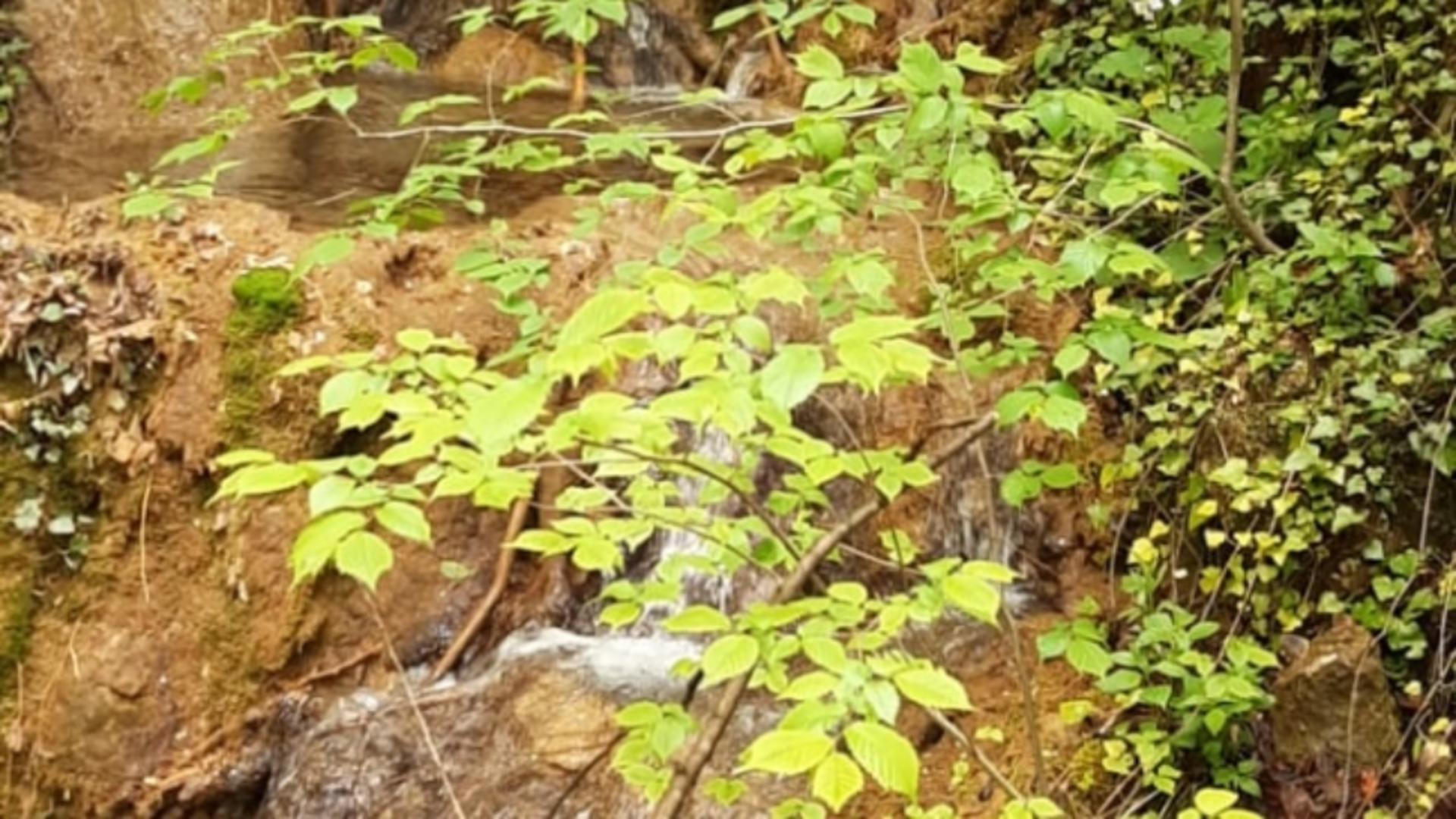 Izvorul din Valea Sohodol / Foto: Laura Gal