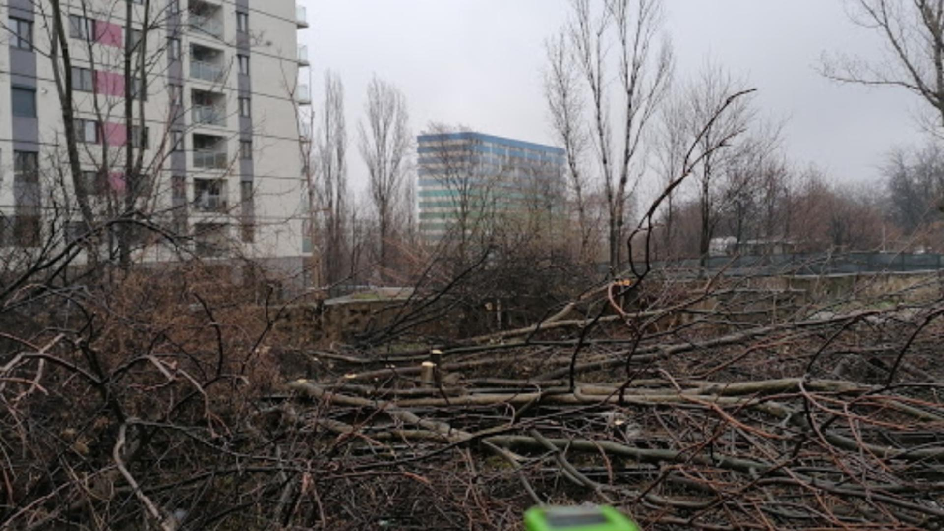 Defrişări ilegale de arbori
