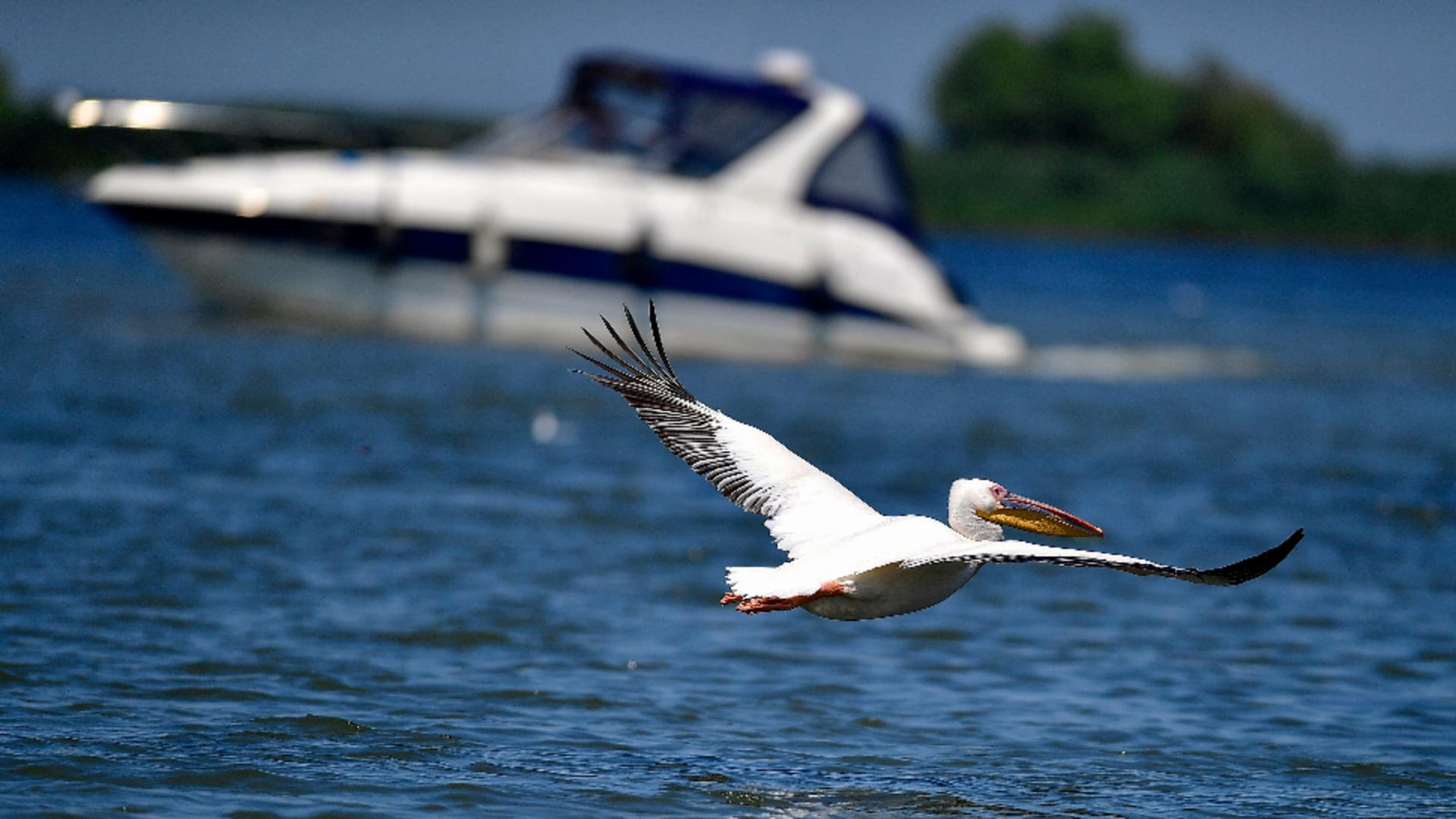 Delta Dunării / Foto: Inquam Photos